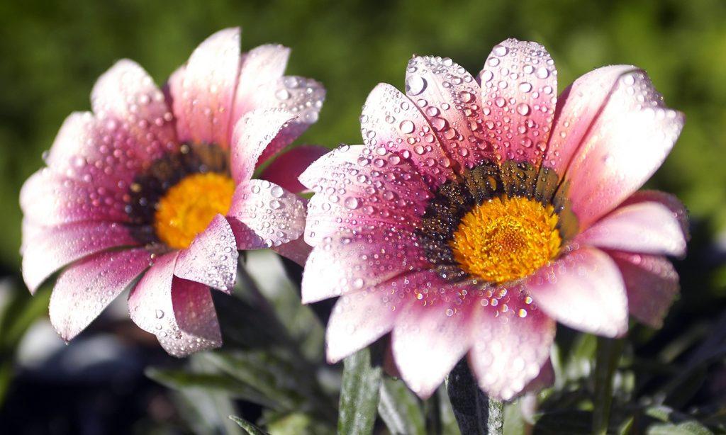 ΚΗΠΟΣ: Φυτά όλο υγεία