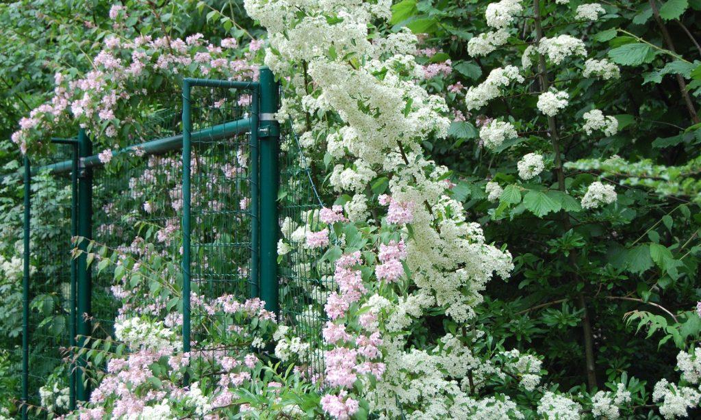 ΚΗΠΟΣ: «Κρεμαστοί» κήποι