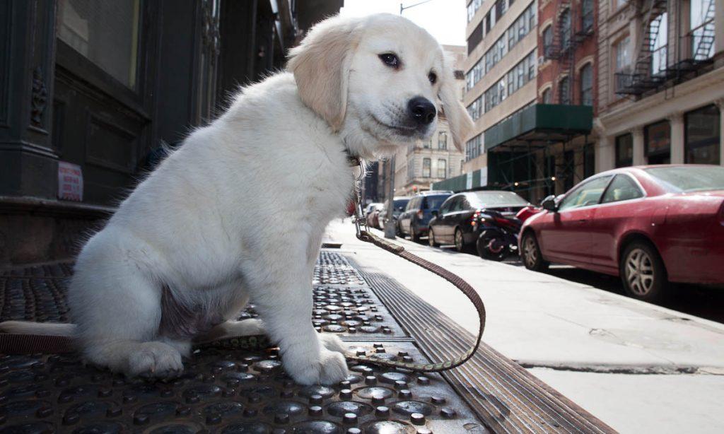 PET: Καλοκαίρι στην πόλη
