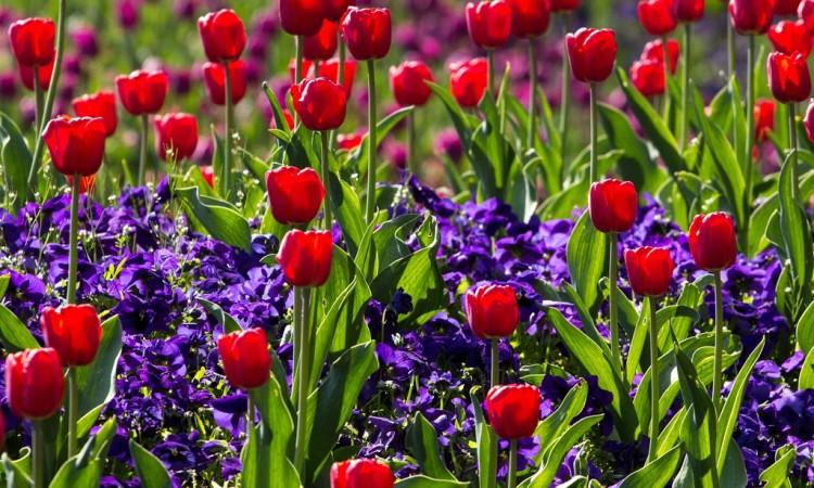 ΚΗΠΟΣ: Ευωδιές και χρώματα από βολβούς