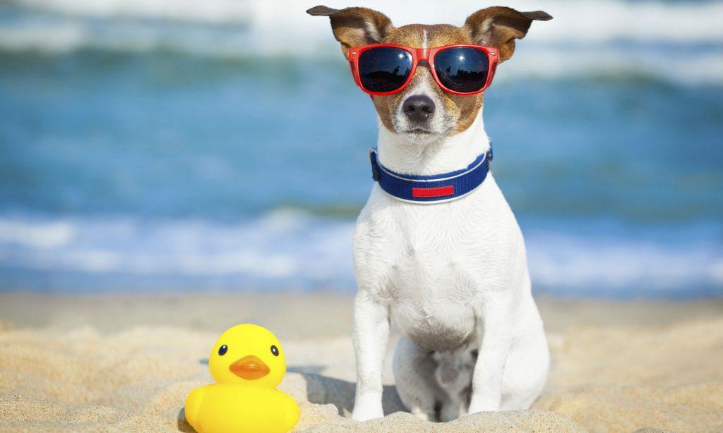PET: Τα ζωάκια στη ζέστη