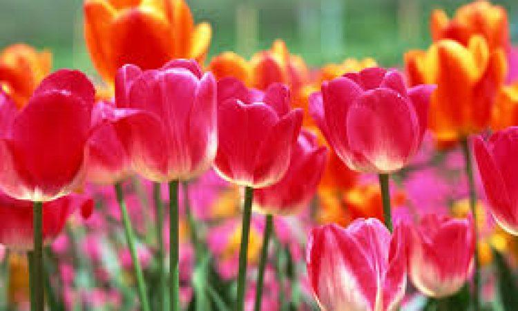 ΚΗΠΟΣ: Ομορφότερα φυτά!