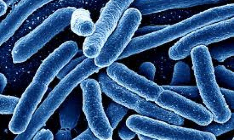 Ένα βήμα πιο κοντά στην καταπολέμηση των ανθεκτικών μικροβίων