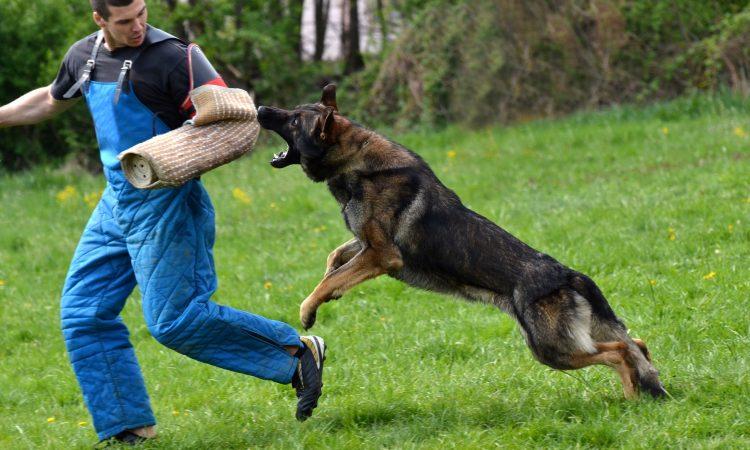PET: Επιθέσεις σκύλων σε ανθρώπους: Είναι στα γονίδια η επιθετικότητα;